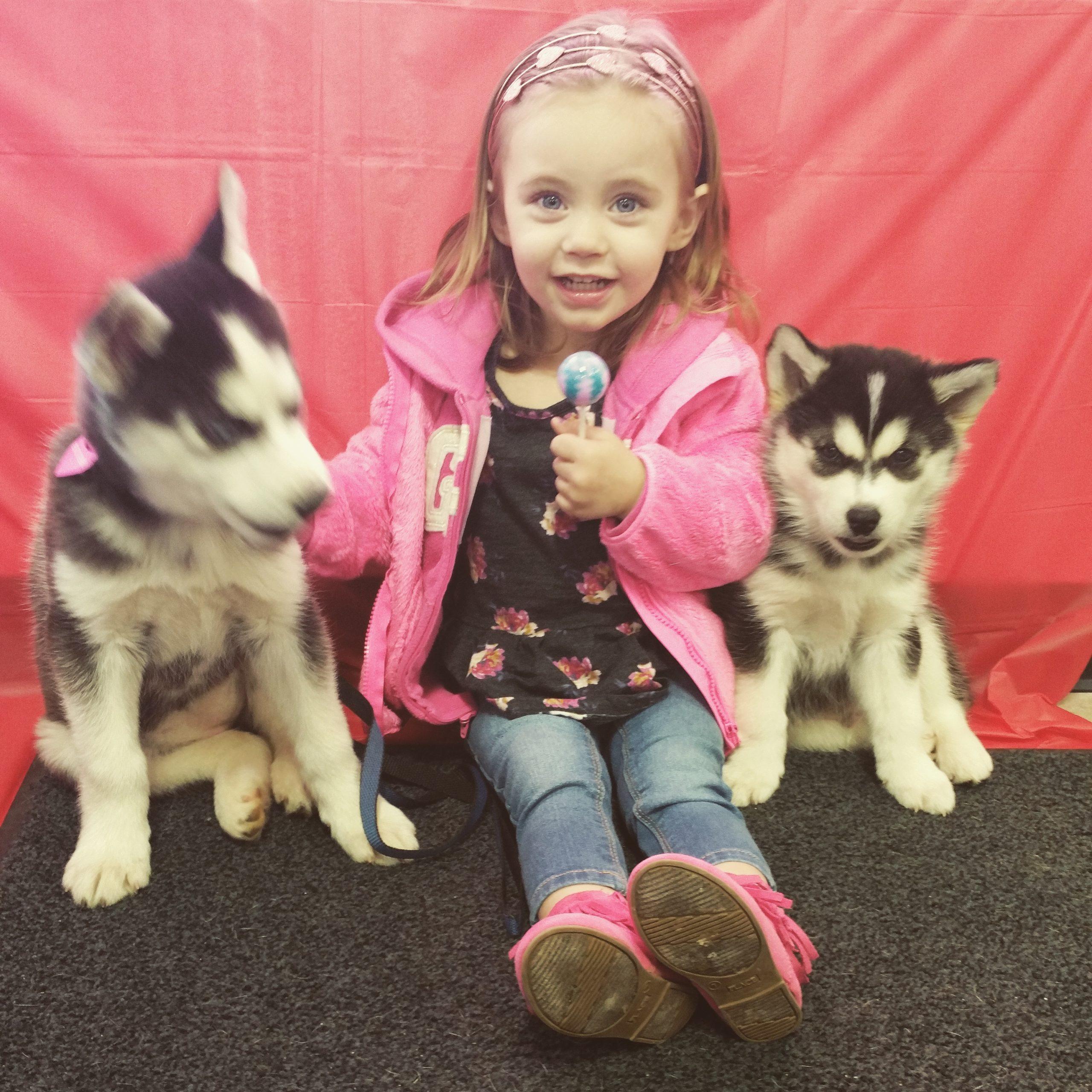 Husky Pups2