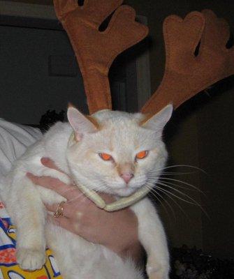 grump-cat-helper