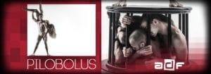 Pilobolus @ DPAC